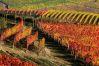Benazzato Oscar: Le terre del Barolo 3