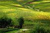 Ghiraldello Bruno: Montalcino
