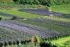 Lo Brano Michele: Vigneti sterminati sulla strada del vino