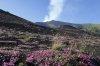 Benazzato Oscar: Fioriture sulle pendici dell'Etna