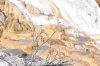 Pilli Flavio: Bizzarie della natura: formazioni saline (Yellowstone)