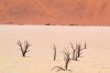 Pilli Flavio: Bizzarie della natura: Lago fossile (Namib desert)